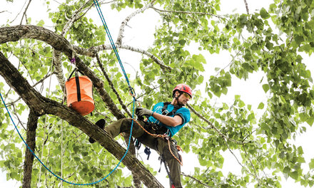 {Low athlete to compete in the tree-climbing world championships}